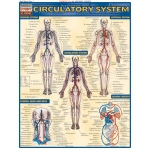 BarCharts Circulatory System Quick Study Guide