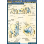 Barcharts Joints & Ligaments