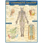 Barcharts Lymphatic System Quick Study Guide