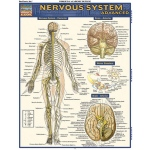 Barcharts Nervous System Advanced Quick Study Guide