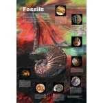 "Fossils Poster: 6"" x 38"""